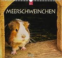 Meerschweinchen 2020: Mittelformat-Kalender