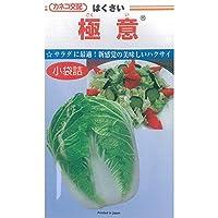【種子】白菜(ハクサイ) 種 極意(ごくい) 1ml カネコ交配