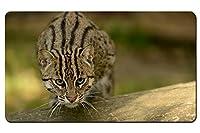 釣り猫 パターンカスタムの マウスパッド 動物 デスクマット 大 (60cmx35cm)