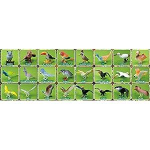 野鳥 花鳥園 フィギュアセット 24種類 クジャク インコ カモ ペリカン 鳥 など
