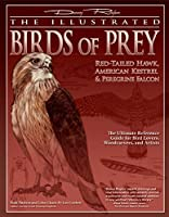 The Illustrated Birds of Prey: Red-tailed Hawk, American Kestrel & Peregrine Falcon