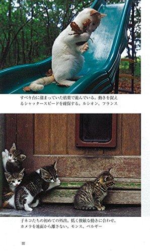 カラー新版 ネコを撮る (朝日新書)