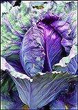 """身近な野菜の奇妙な話 健康と美食を彩る""""もと雑草""""、その妖しい伝承の正体は? (サイエンス・アイ新書)"""