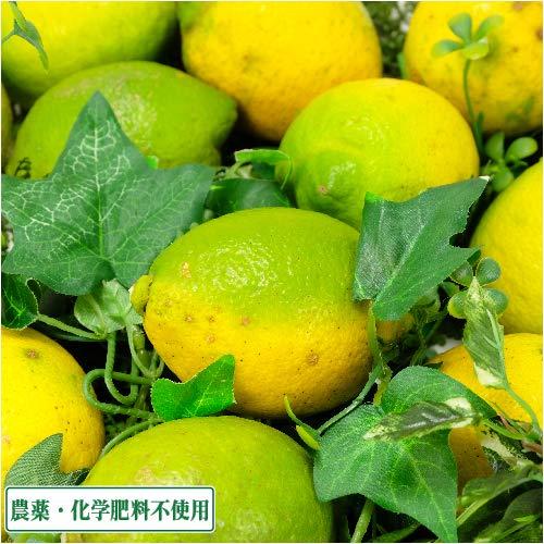 【セール】レモン A・B品サイズ混合 10kg 県特別栽培(無・無)(熊本県 オレンジヒルズ) 産地直送 ふるさと21