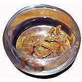 「♣zqion」空き水槽に鱼出現 appearing goldfish 魚がかわる装置 手品道具