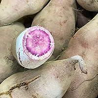 【低農薬】紫芋(種子島紫)5kg 訳アリ品お買い得