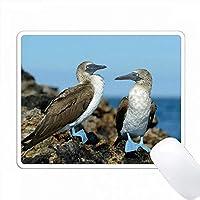 エクアドル、ガラパゴス諸島、イサベラ島。青い足のブービー。 PC Mouse Pad パソコン マウスパッド