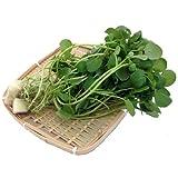 国産サラダ野菜 新鮮クレソン業務用 2kg 水耕栽培