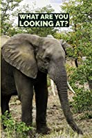 Sassy Animal Journal: What are you Looking at?: Rude Animal Journal Notebook to Write in