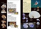 日本の貝: 温帯域・浅海で見られる種の生態写真+貝殻標本 (ネイチャーウォッチングガイドブック) 画像