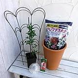 クレマチスの鉢栽培セット:シルホサ[冬咲き・シルホサ系]
