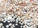星の砂 10g 星砂 レジン 白 封入 ハンドメイド 素材 アップフェル