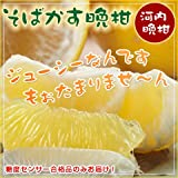 熊本県産 和製グレープフルーツ 「河内晩柑 3kg」