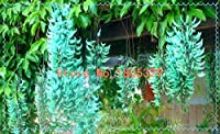 100%本物の100 PCSジェイド電子シード、希少種、香り鉢植えのホーム&アンペアのために、ガーデン:5