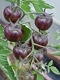 【PLANT】Blue Tomato Black Strawberry ブルートマト・ブラック・ストロベリー(9cmポット自根苗2苗)*2018新品種
