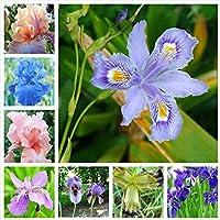 10個盆栽アイリス花多年草レアビアードアイリス屋外植木鉢自然植物園芸植物のためのオーキッドフローレス(hu die lan):混合