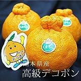 【 産地直送 】 熊本県産 高級 デコポン 熊本が誇る本物のデコポン!! (デコポン専用箱 ( 8?12玉 約3kg ))