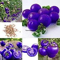 種子:20PCS:鉢植え野菜フルーツ種子ホームKecpを成長させるレアパープルトマト種子簡単