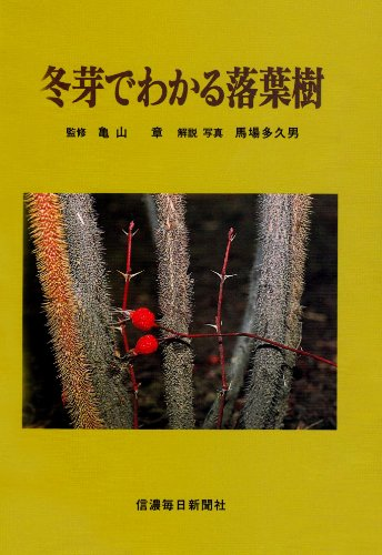 冬芽でわかる落葉樹の詳細を見る