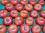 長野県産 生産農家直送 訳ありりんご 「ポケットサイズのシナノスイート」 ご家庭向き 40~50玉 約10kg入り/箱