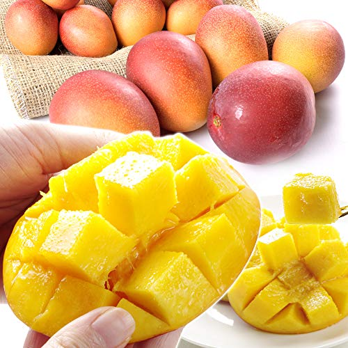 国華園 宮崎産 ふぞろいアップルマンゴー1kg ご家庭用