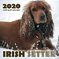 Irish Setter 2020 Mini Wall Calendar