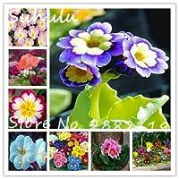 混合:120粒子珍しい美しい月見草の種100%の真のヨーロッパプリムラ花の種Diyのホームガーデンの贈り物としての植栽