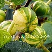 2:20種子鉢植え甘い蜂蜜イチジク種子バルコニー野菜果物盆栽植物Diyホームガーデン盆栽