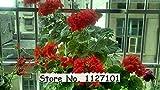盆栽ホーム&ガーデンフロールのための24種類の200pcsのベゴニアの種子レアFower種子に植物の空気浄化11を鉢植え