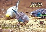【Amazon.co.jp 限定】セキセイインコ・鳥写真カレンダー 2020 (B6サイズ。ワンタッチで卓上にも壁掛けにもなる3Wayカレンダー)