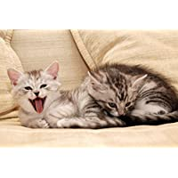 眠そうな子猫動物 - #32478 - キャンバス印刷アートポスター 写真 部屋インテリア絵画 ポスター 90cmx60cm