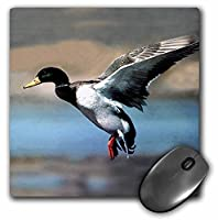 3drose LLC 8x 8x 0.25インチマウスパッド、Mallard Duck (MP 881_ 1)