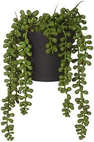 ROGUE String of Pearls-Garden Pot