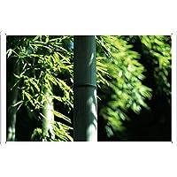 竹6のティンサイン 金属看板 ポスター / Tin Sign Metal Poster of Bamboo 6