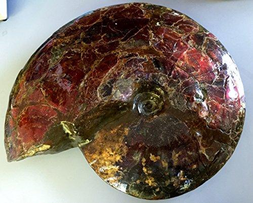 アンモライト原石 最大級の大きさ