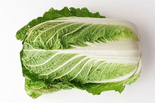 白菜 約1.5Kg 福岡産