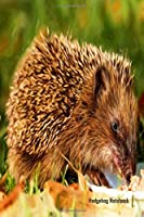 Hedgehog Notebook: Cute hedgehog notebook journal to write in with blank lined pages. Sweet hedgehog lovers gift.
