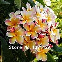 100ピース種子プルメリアハワイアンフォームフランジパニフラワーウェディングパーティーの装飾ロマンス