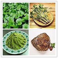 200ピース:100/200ピースホームガーデンわさびの種日本の西洋わさびの種野菜