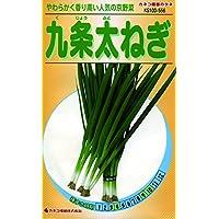 カネコ種苗 野菜タネ556 九条太ねぎ 10袋セット