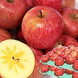 りんご 10kg箱 サンふじ ご家庭用 青森 10キロ箱 林檎