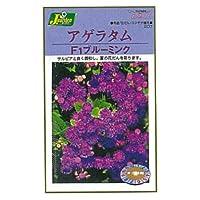 カネコ種苗 園芸・種 KS200シリーズ アゲラタム F1ブルーミンク 草花200 207