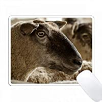 Sheep、Freeport、Maine PC Mouse Pad パソコン マウスパッド