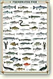 ポスター Freshwater Fish