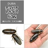 (生餌)デュビア(アルゼンチンモリゴキブリ) Lサイズ(50匹) [生体]