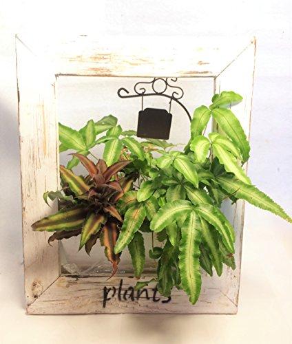 ウッドフレームプランツ ホワイトA プテリス クリプタンサス グリーン 観葉植物