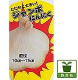 野菜苗 ジャンボニンニク3.5号ポット 2株セット