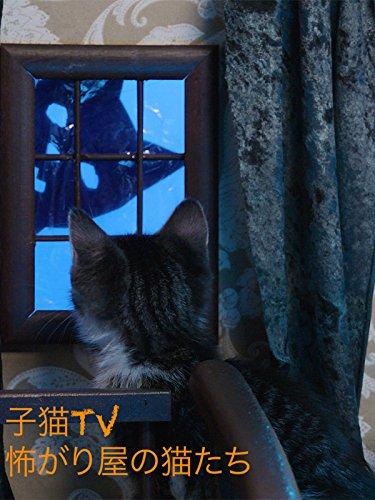 子猫TV 怖がり屋の猫たち