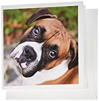 カルステンライジンガーイラスト−写真–キュートボクサー犬縦Canine–グリーティングカード Set of 12 Greeting Cards