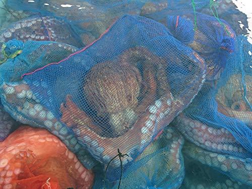産直丸魚 北三陸、岩手洋野町産 生みずだこ (さばき済み)  ボイルだこ・柔らか煮などで!  タコ たこ ミズダコ 活だこ (6kgもの)